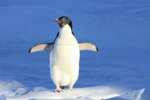 Pingvin filter, pixabay.com