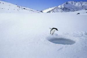 Pingvin 4 filter
